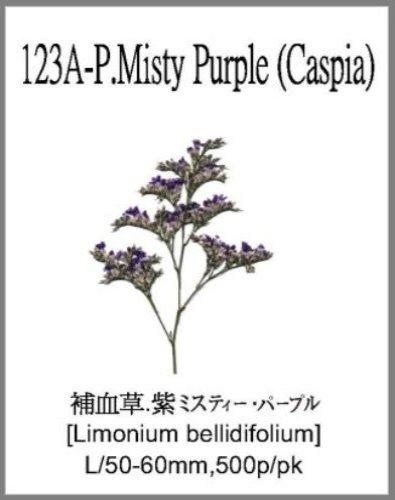 123A-P.Mis