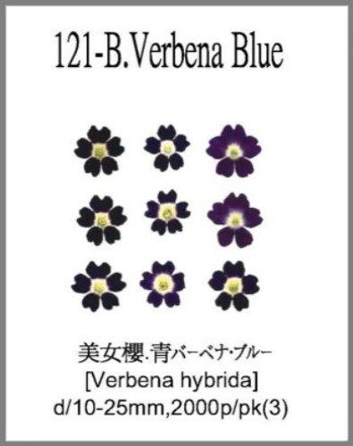 121-B.Verb