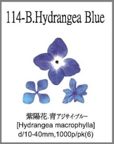 114-B.Hydr