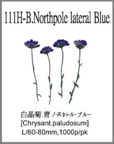 111H-B.Nor