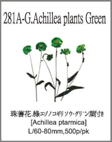 281A-G.Ach