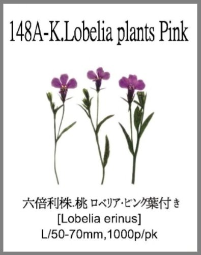 148A-K.Lob