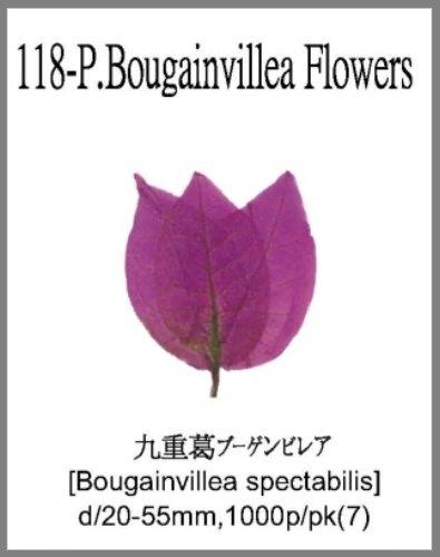 118-P.Boug