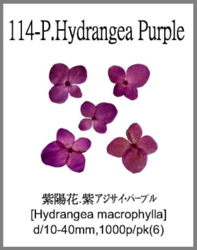 114-P.Hydr