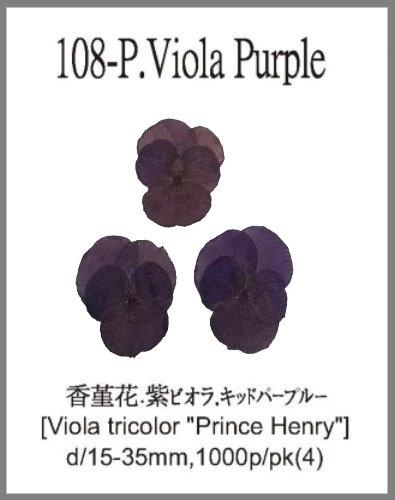 108-P.Viol