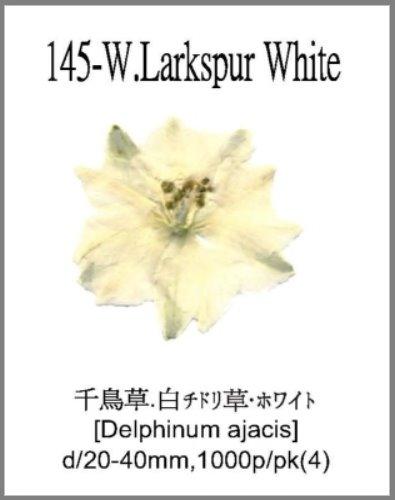145-W.Lark