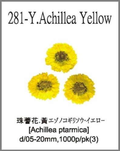 281-Y.Achi